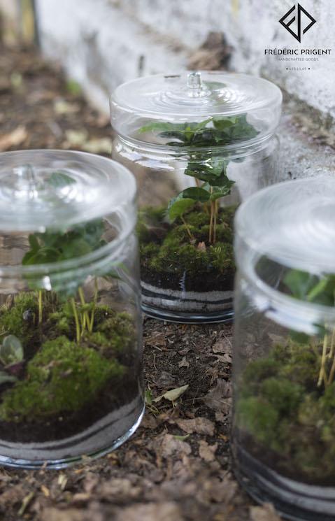 terrarium humide coffea arabica fredericprigent. Black Bedroom Furniture Sets. Home Design Ideas