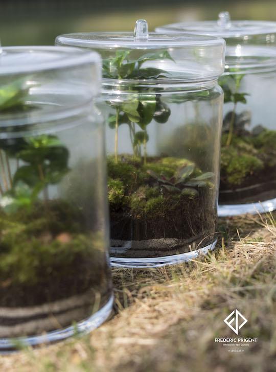 collection coffea arabica terrarium fredericprigent. Black Bedroom Furniture Sets. Home Design Ideas