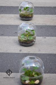 Terrarium Pilea peperomioides