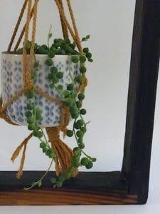 Cadre Végétal avec macramé, Séneçon de Rowley