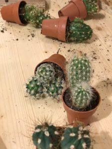 succulente cactus
