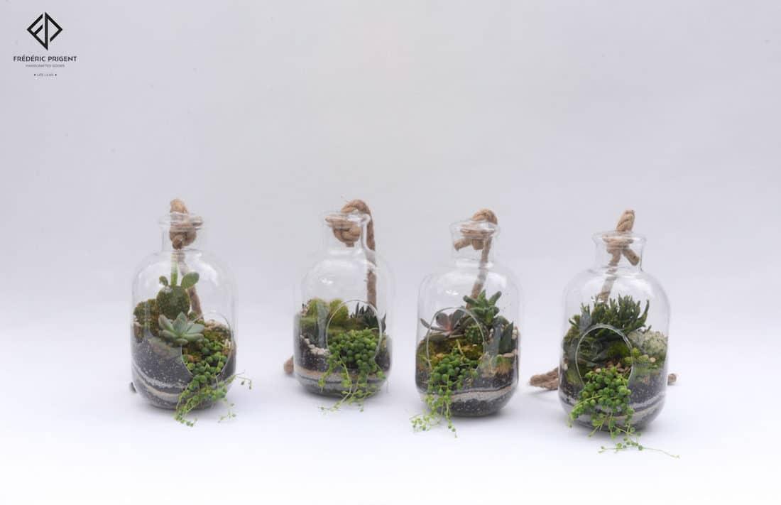 terrarium, succulentes, plantes grasses, mini cactus séneçon de rowley, Hatiora salicornioides, joubarbe, aloes