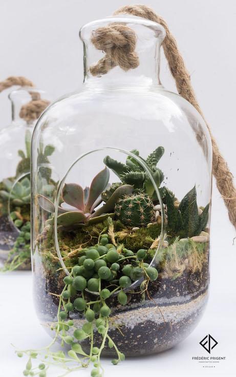 terrarium, succulentes, plantes grasses, mini cactus, aloes, séneçon de rowley, joubarbe