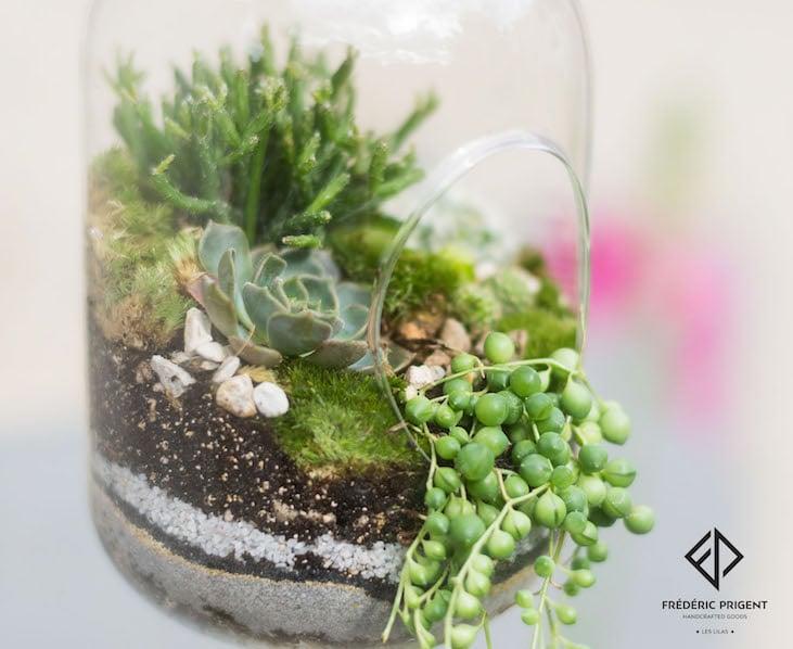 terrarium, succulentes, plantes grasses, séneçon de rowley, Hatiora salicornioides, joubarbe