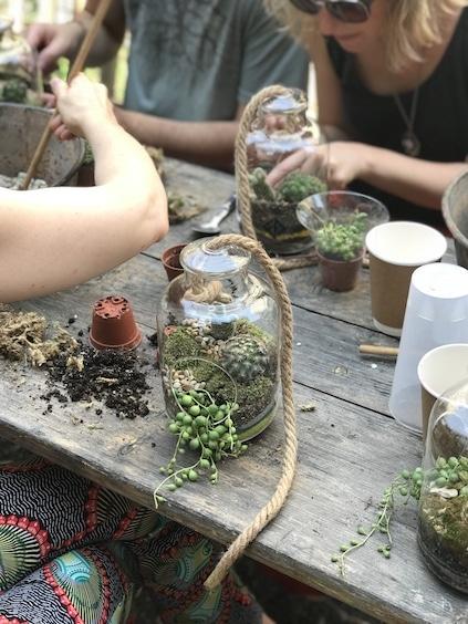 terrarium, succulentes, plantes grasses, mini cactus séneçon de rowley